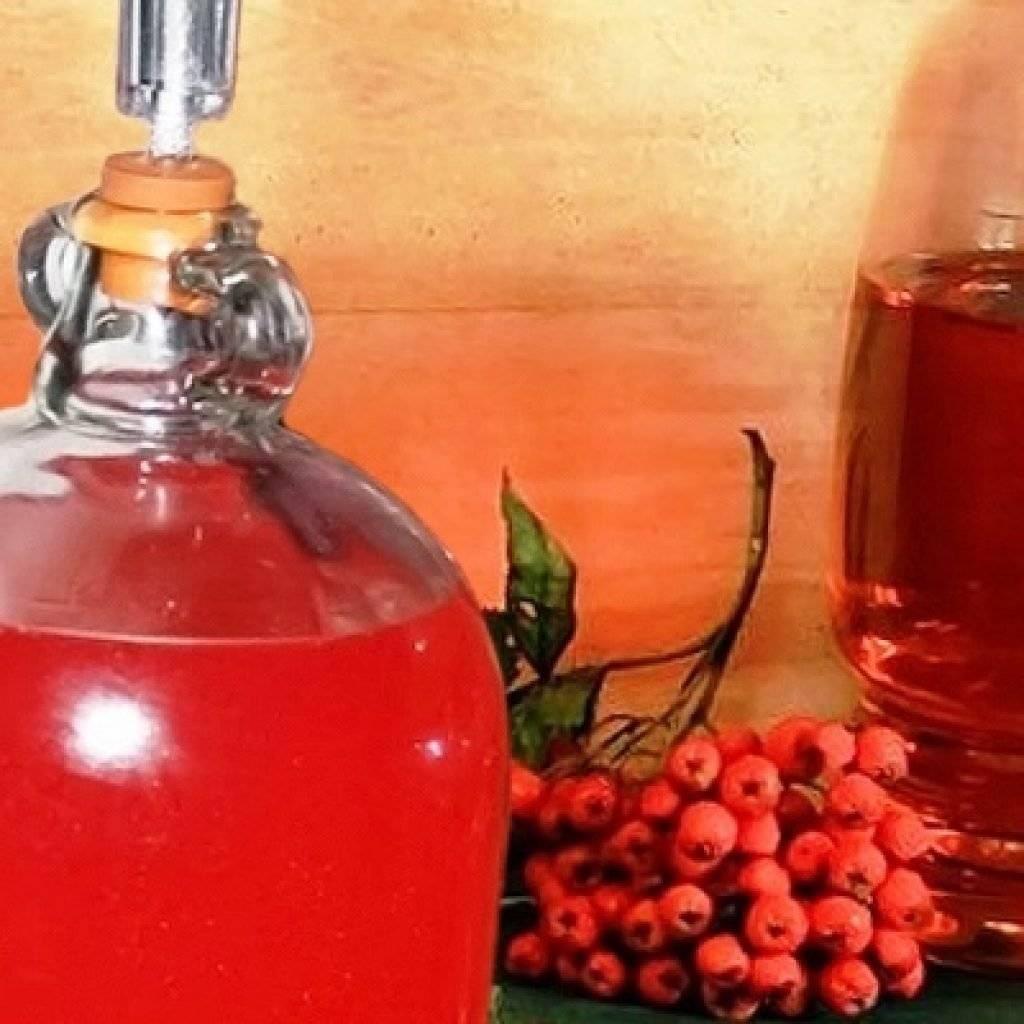 Вино из красной рябины: 2 рецепта в домашних условиях