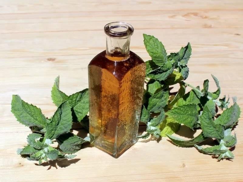 Настойка мелиссы на водке — как правильно сделать спиртовую настойку? настойка мелиссы на водке — как правильно сделать спиртовую настойку?