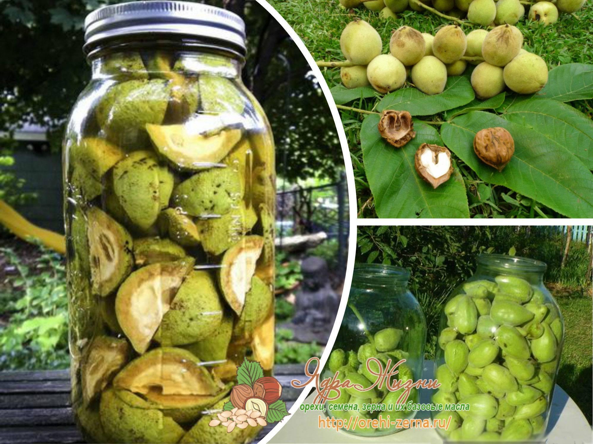 Польза настойки на грецких орехах