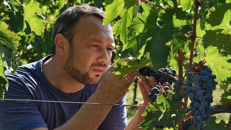 Винный севастополь: где туристу искать редкие вкусы крыма
