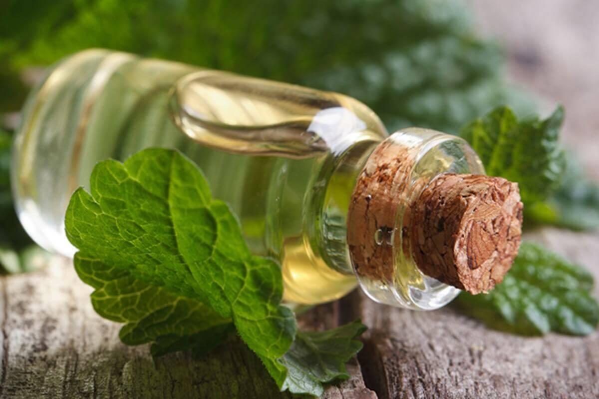 Мелисса для кожи лица: отвар, настой, эфирное масло, лед, маски. отзывы | блог о красоте и здоровье