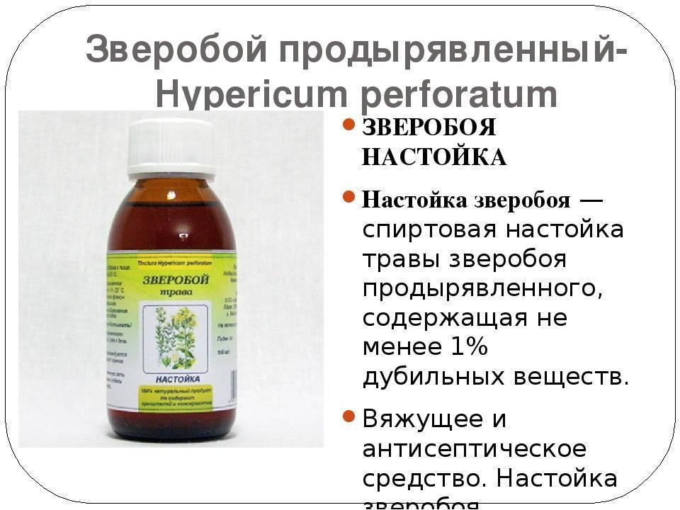 Лечебные свойства зверобоя и возможные противопоказания для организма человека