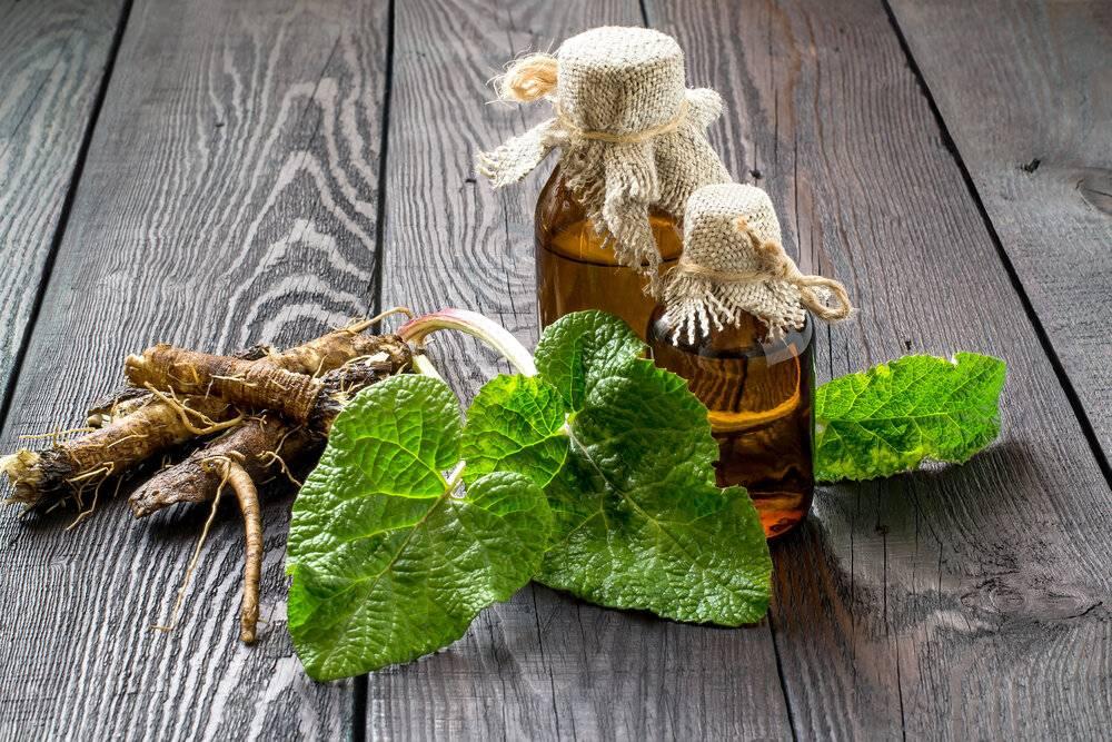 Настойка из листьев лопуха на спирту. отвары, настои и спиртовая настойка из лопуха для лечения различных недугов. рецепт настойки из корня лопуха