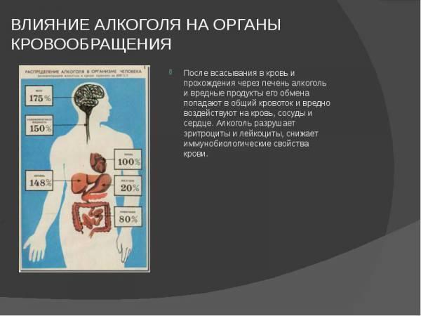 Как спиртное воздействует на кровеносные сосуды: очищение после запоя | medeponim.ru