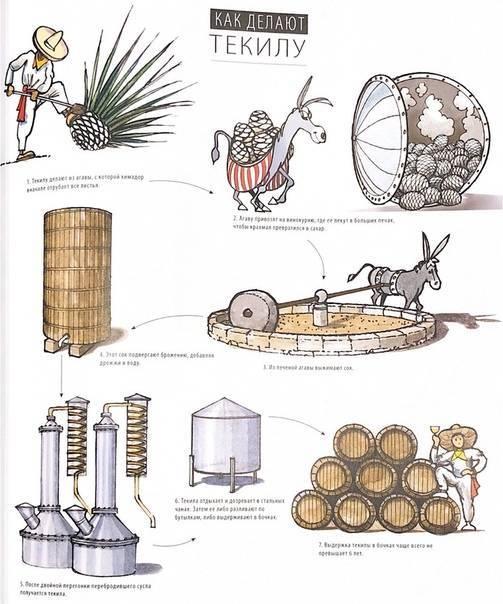 Из чего делают текилу: основные ингредиенты, технология приготовления, как правильно употреблять