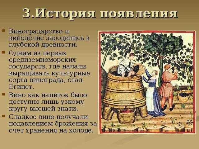 Классификация и культура употребления вин