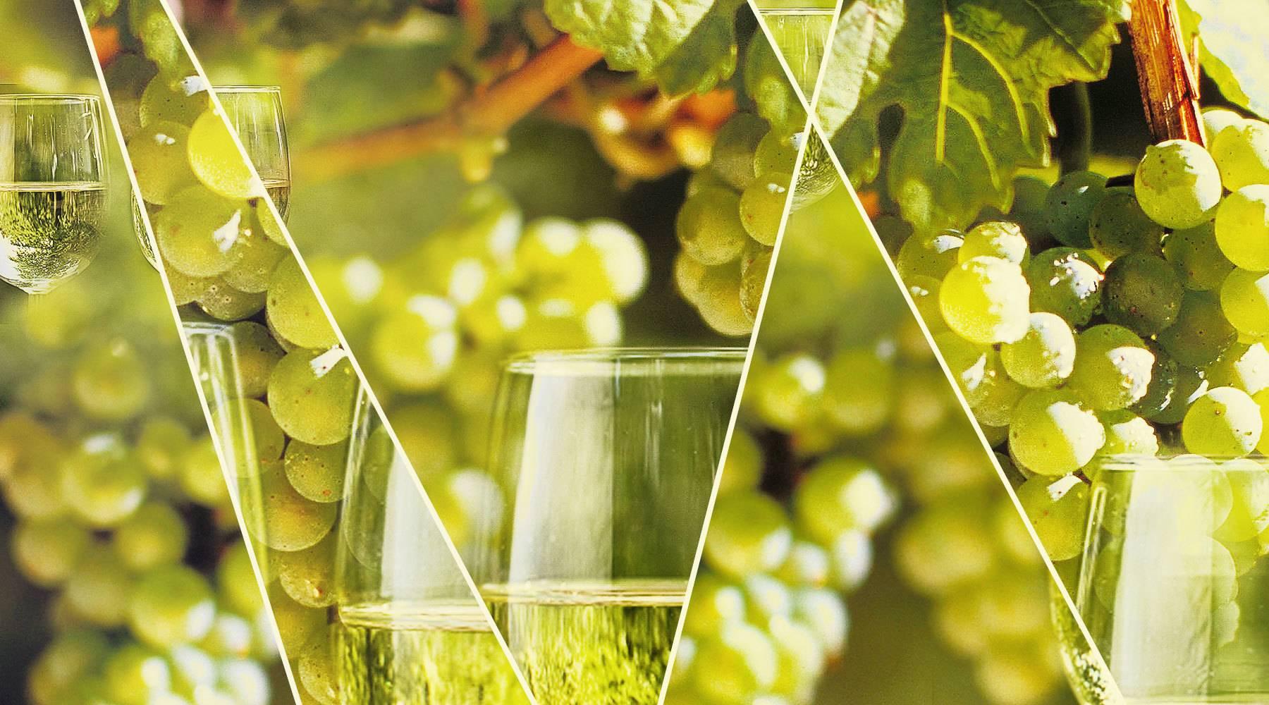 Рислинг вино — виды, особенности, вкусовые качества и свойства напитка (видео + фото)