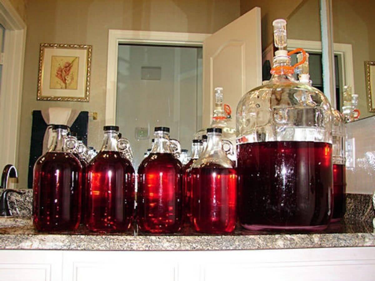 Домашнее вино: что нужно знать начинающему