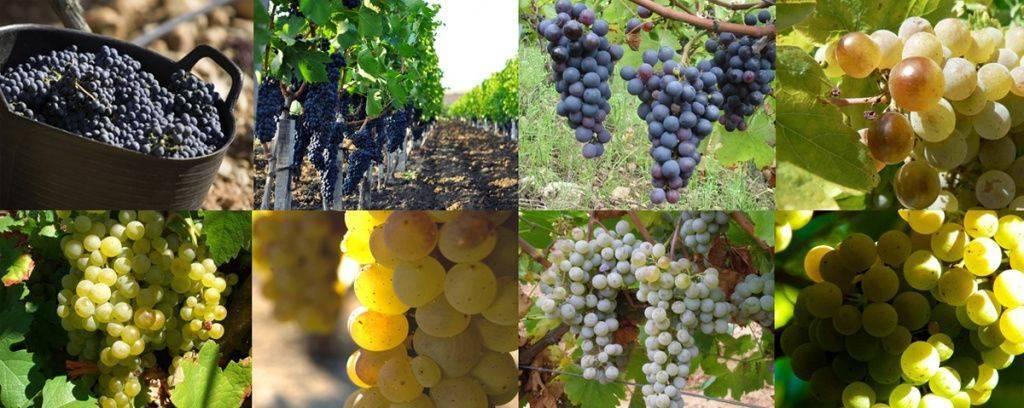 Автохтонное вино - что это такое?
