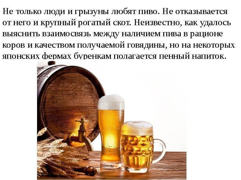 Интересные факты о пиве :: инфониак