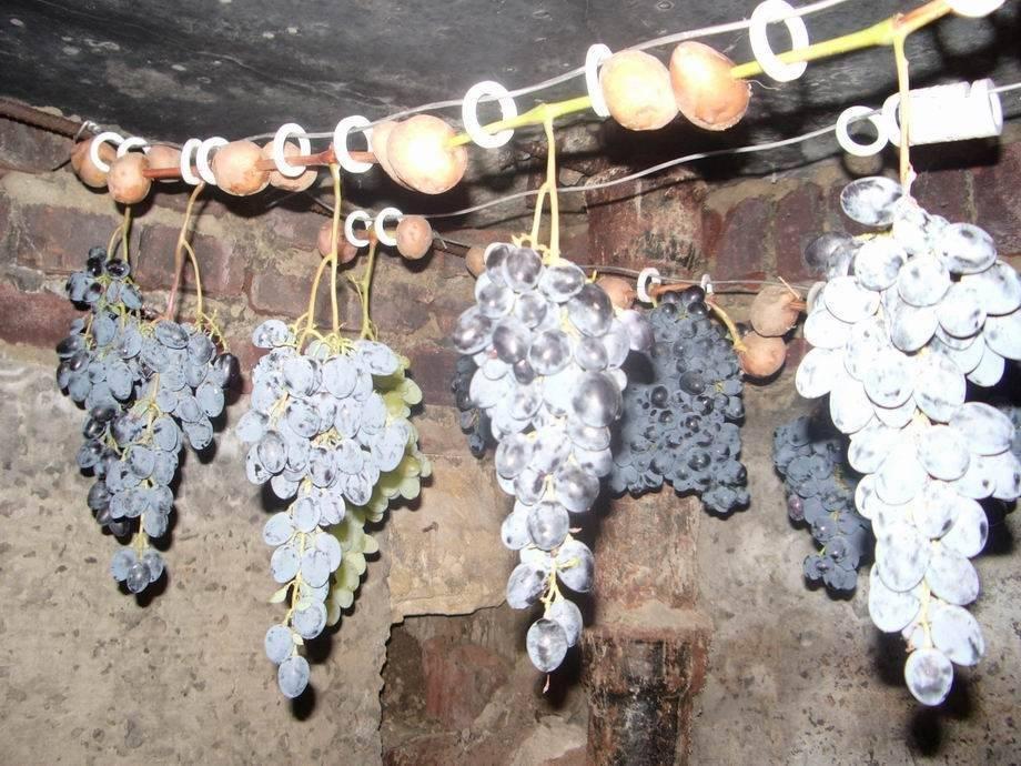 Способы выращивания винограда в домашних условиях из косточки