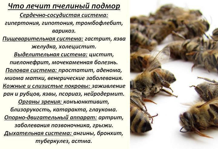 Пчелиный подмор: настойка на водке, при каких заболеваниях, рецепт и применение.