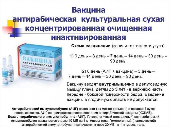 После прививки от клеща можно пить алкоголь