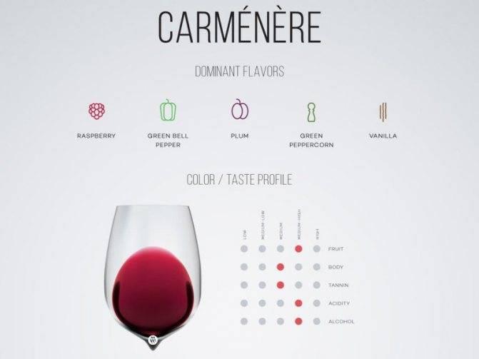 Карменер сорт винограда- его описание, применение,правила посадки и выращивания