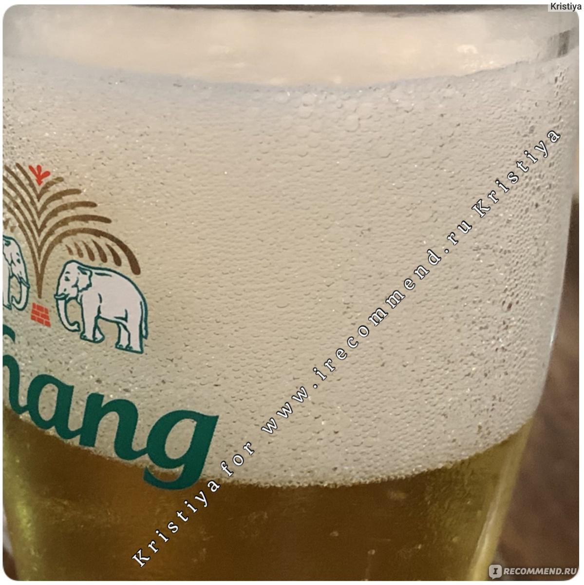 Тайское пиво - названия, сорта, особенности, вкус и качество