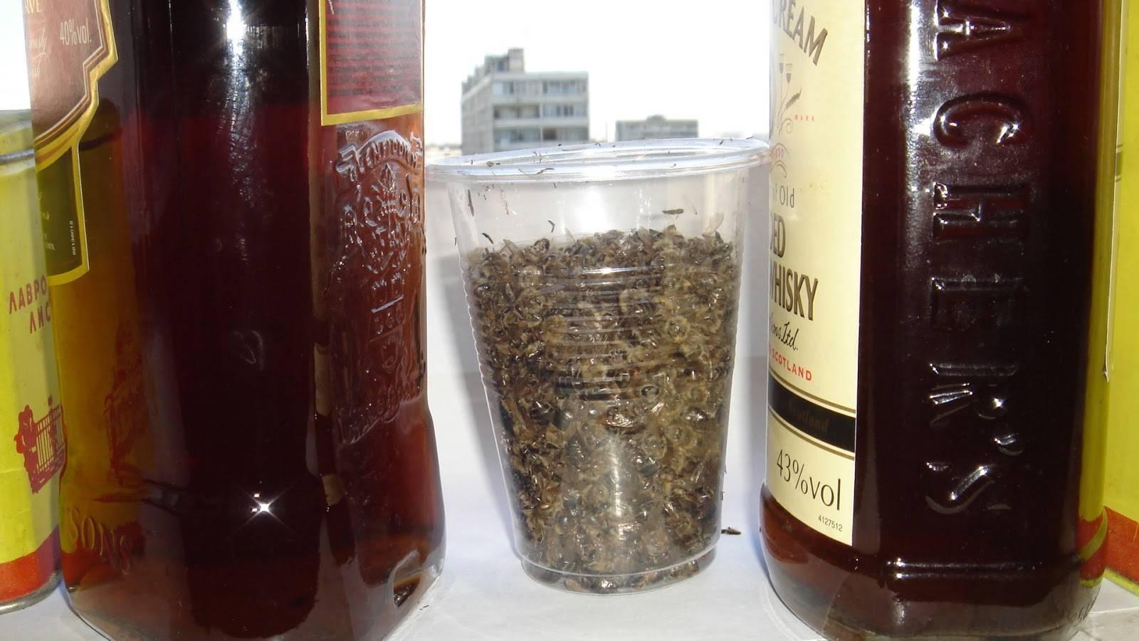 Топ-5 самых полезных свойств чаги на спирту