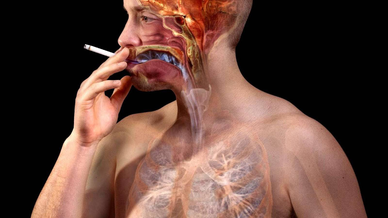 Воздействие никотина на функцию щитовидной железы