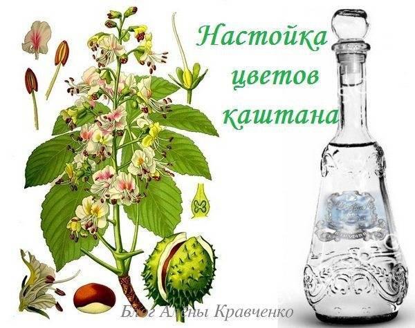 Настойка из каштана для суставов рецепт на водке