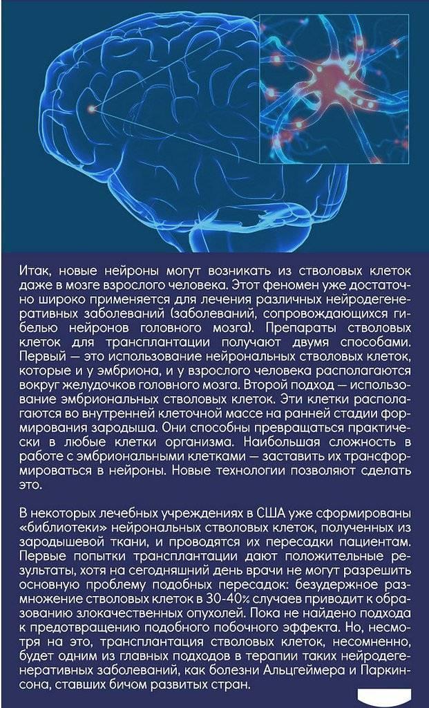 Нервные клетки не восстанавливаются! миф или правда? | викиум | яндекс дзен