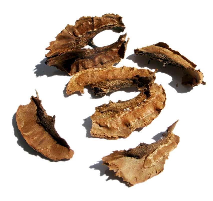 Перегородки грецкого ореха: польза и вред, лечебные свойства, применение