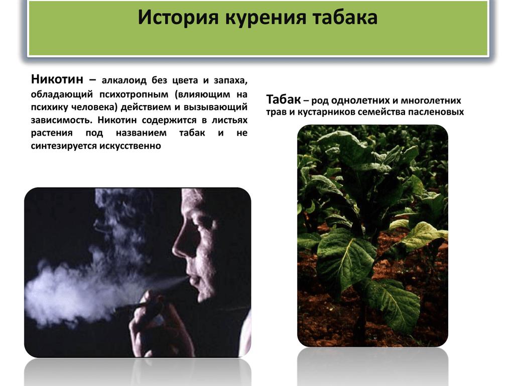 Особенности выращивания курительного табака и махорки на приусадебном участке. популярные сорта