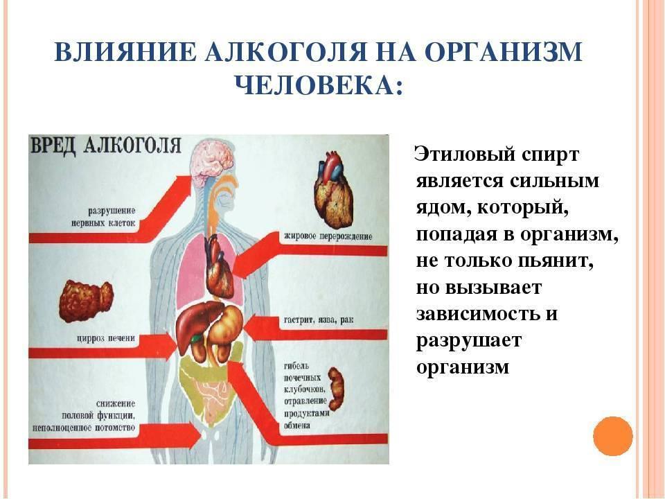 Жданов о вреде алкоголя: лекция профессора о вреде
