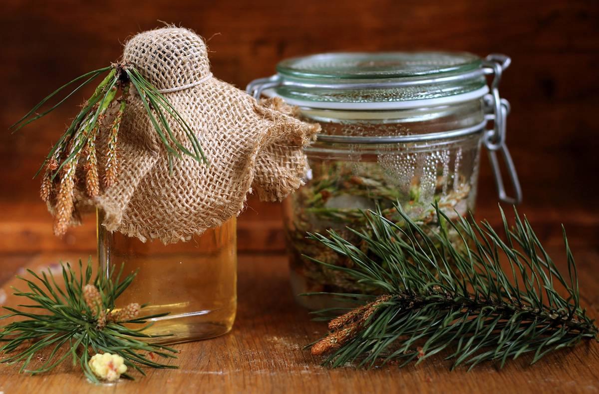Сосновые шишки настойка на водке: лечебные свойства, рецепт, как принимать