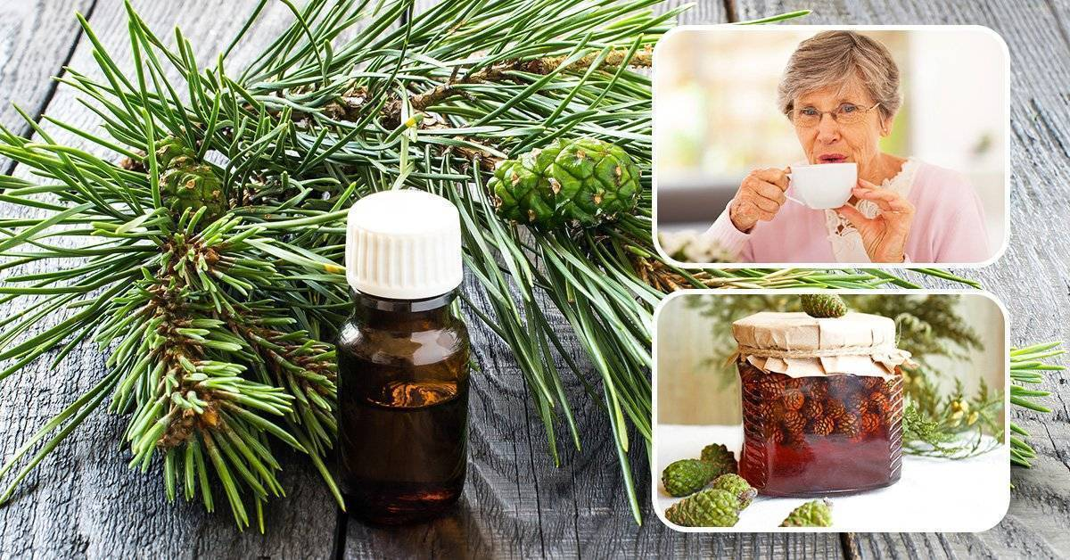 Настойка сосновых шишек — польза и вред, как принимать   здоровье и красота