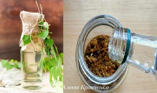 Как выглядят березовые почки. настойка из березовых почек на спирту или водке. заготовка лечебного сырья - новая медицина