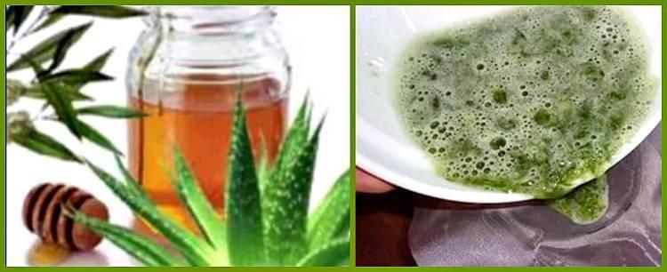 Лечебные свойства и противопоказания алоэ вера с медом. рецепты приготовления целебных средств