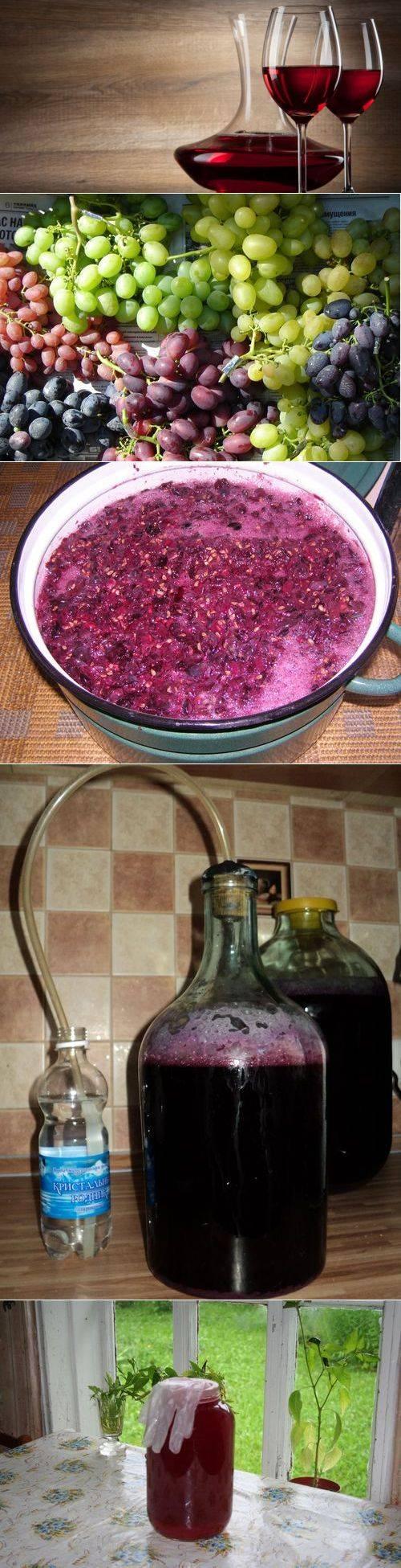 Как делать вино из винограда лидия в домашних условиях? несложные рецепты своими руками