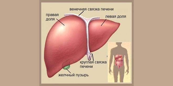 Отказ печени симптомы