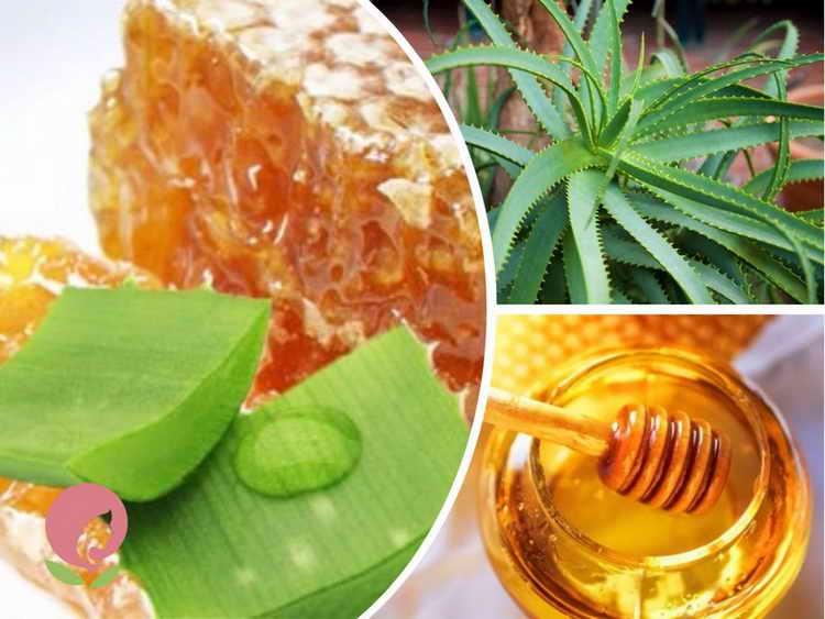 Что лечит смесь из алоэ, мёда, кагора: рецепты приготовления