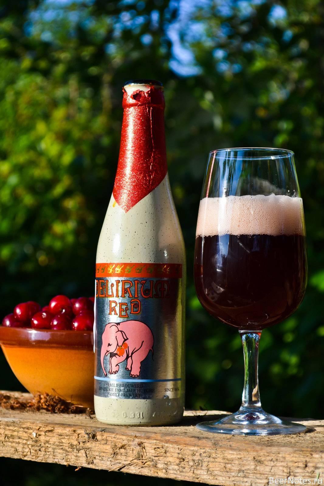 Особенности, преимущества и лучшие производители вишневого пива