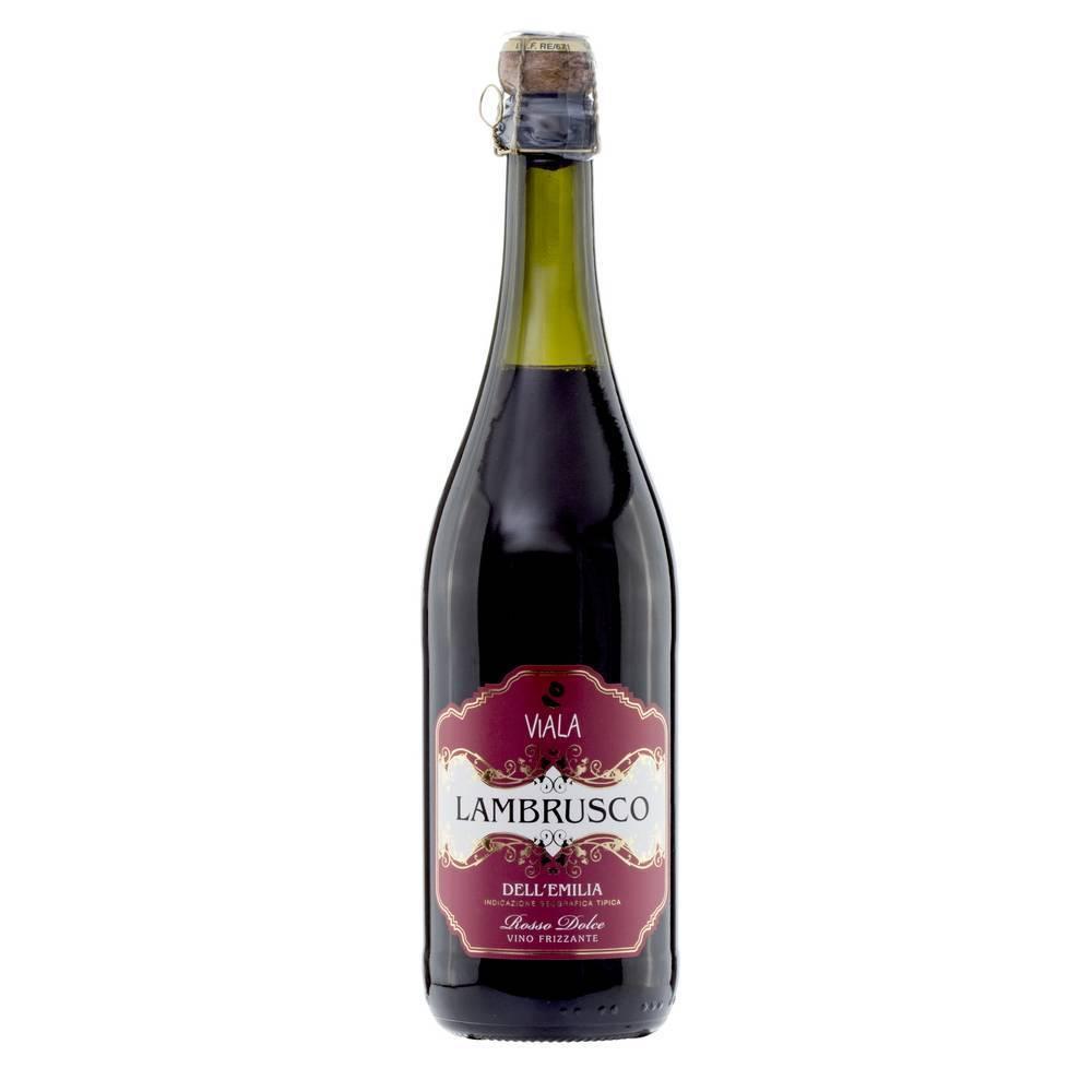 Ламбруско — шампанское или игристое вино? выясняем все особенности напитка