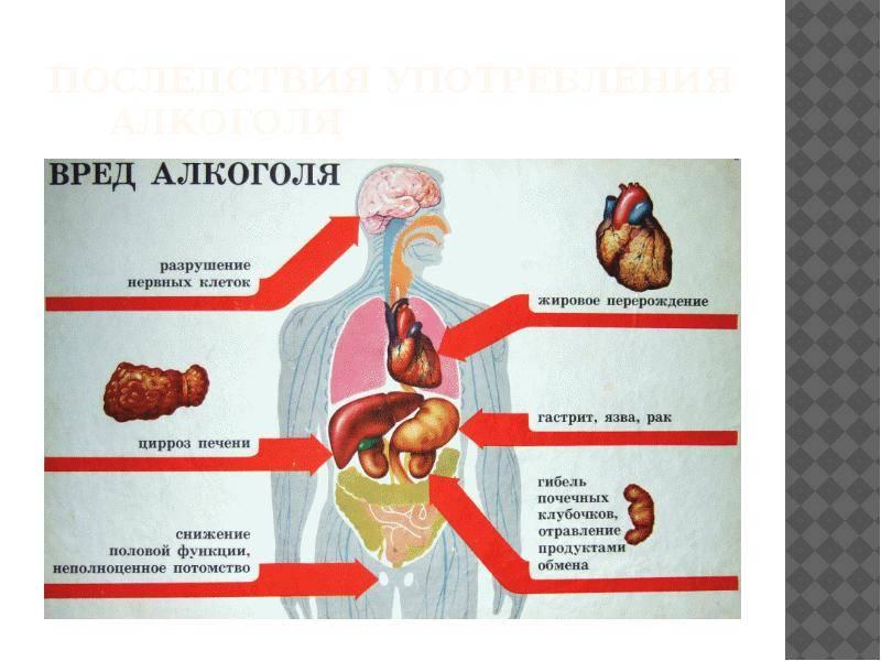 Как восстановить организм после алкоголя: рекомендации и предостережения