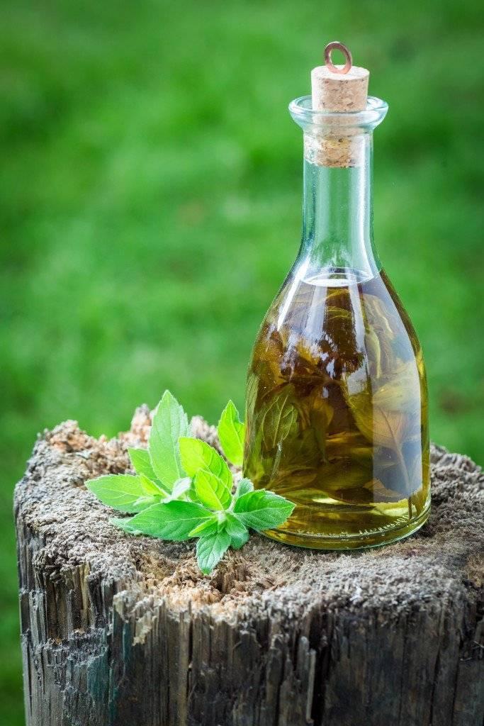 Рецепт приготовления настойки из лимона и мяты на водке, самогоне или спирте. полезные свойства и противопоказания